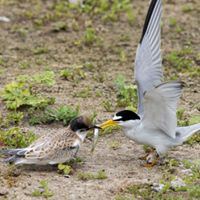 Audubon Society Sea & Sage