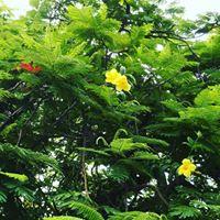 Magnolia Caffee