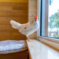 Country Inn Pet Resort & Animal Hospital