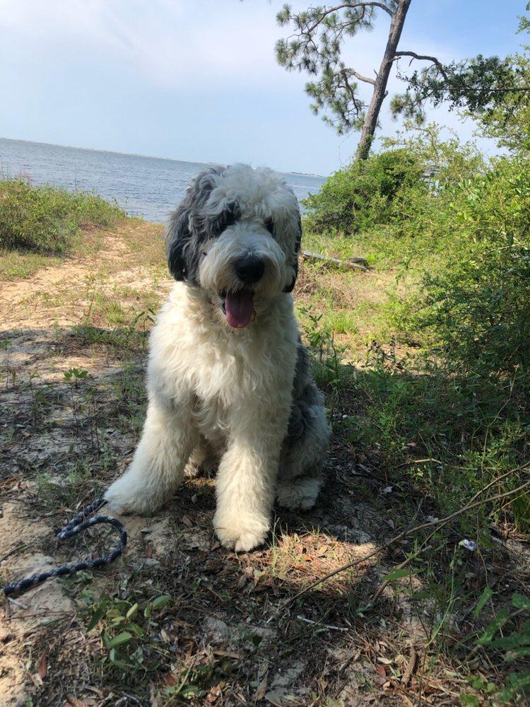 Cathy's Doggy Daze 3211 Gulf Breeze Pkwy, Gulf Breeze