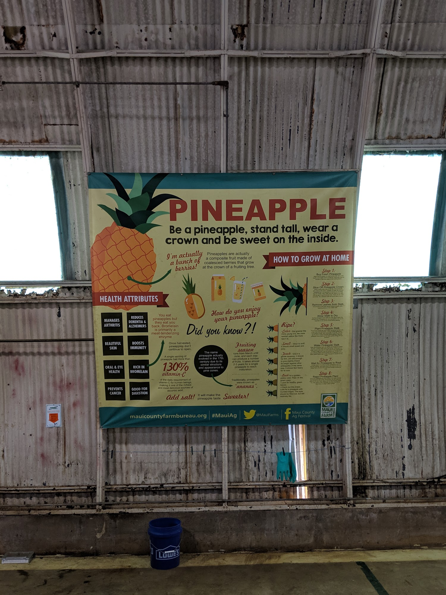 Haliimaile Pineapple Co Ltd