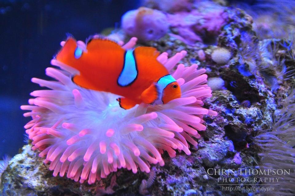 Newport Aquarium 1 Levee Way, Newport