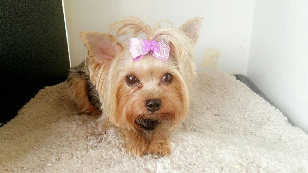 Pet Palace Pet Grooming 12980 Ailes Rd, Anna